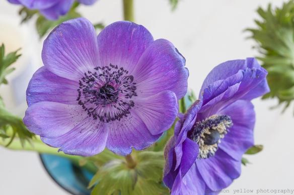 anemone1