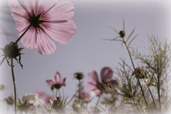 summer flowers1